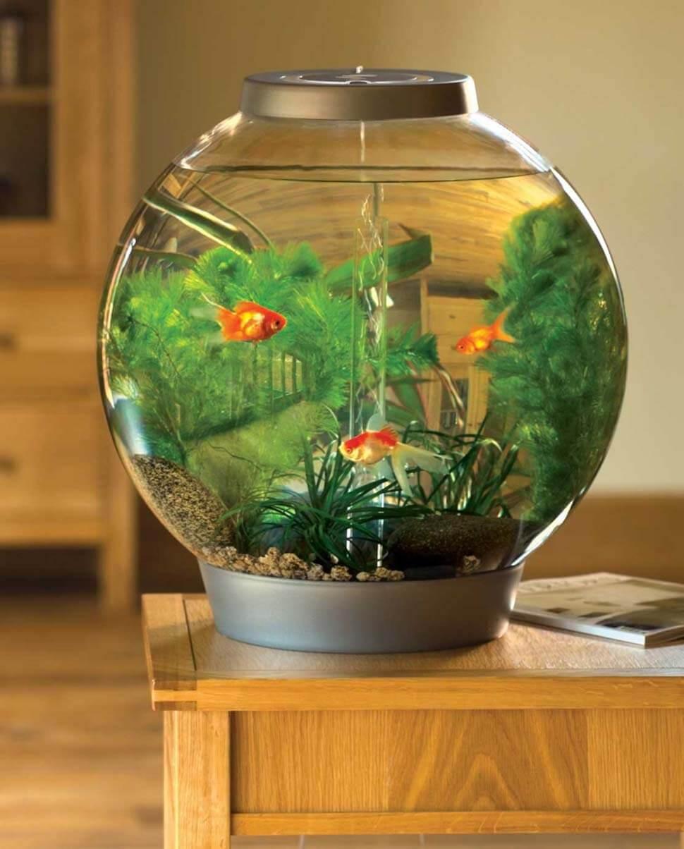 bể cá hình tròn hợp với phong thủy bể cá cảnh trong nhà