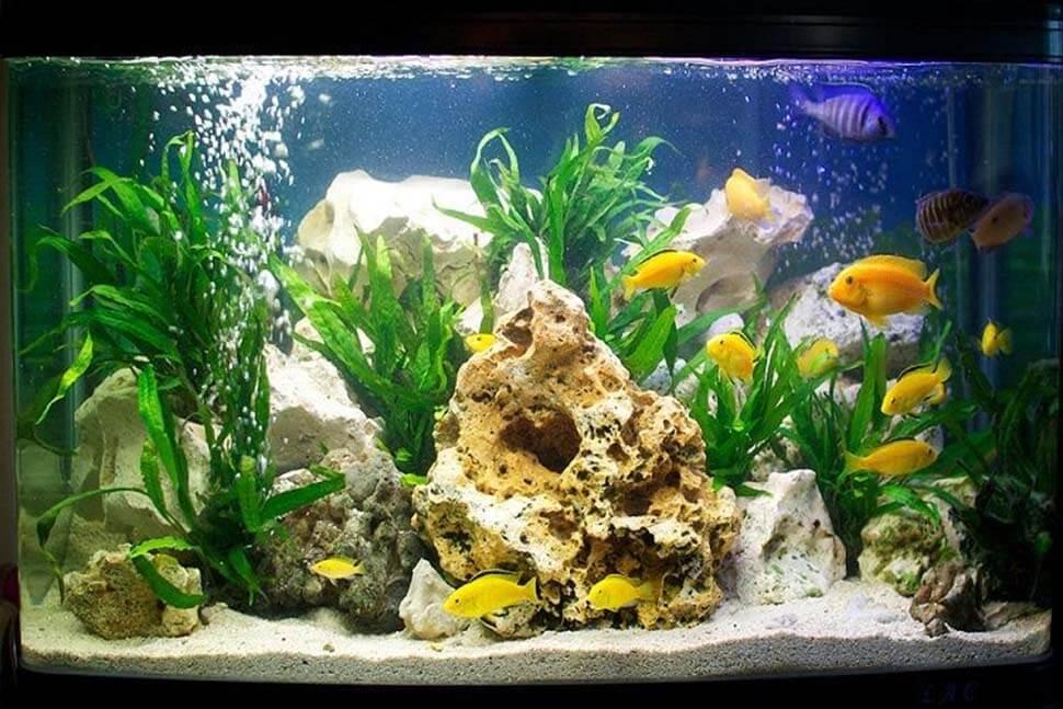 phong thủy bể cá cảnh trong nhà